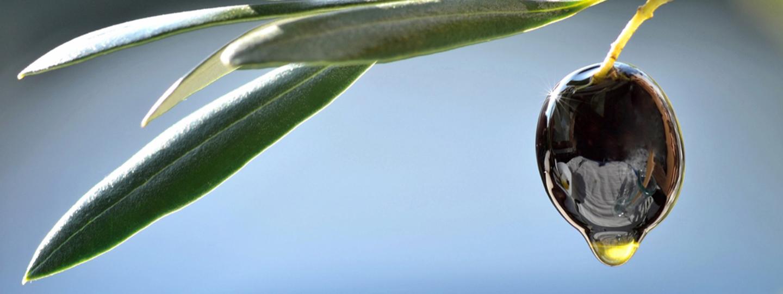 olive idrossitirolo olio di oliva